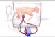 علماء يجرون اول تجربة لرحم اصطناعي