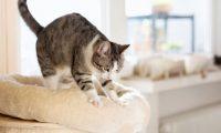 لماذا تتصرف القطط أحيانًا كأنها تعجن شيء ما؟
