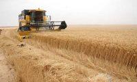 الزراعة النيابية : تحويل 50 بالمئة من مستحقات الفلاحين الى التجارة