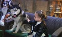 مطعم للحيوانات الأليفة في مصر